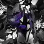 """Delphinium 0292  Desaturated Edit"" by BarbaraLin"
