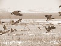 Take Off - Sepia
