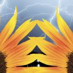 """A Two Sunflower Lightning Storm"" by lightningman"