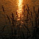 """On Golden Pond"" by djphotos"