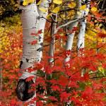 """""""Fall Foliage"""" by paulwnashphotography"""