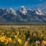 """Teton Meadows"" by paulwnashphotography"