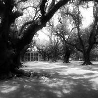 Old Oaks (B&W)