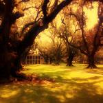 """Old Oaks (Color)"" by pcjordan2006"