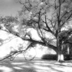 """Infrared Tree and Mausoleum"" by rbagwell"