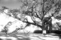 Infrared Tree and Mausoleum