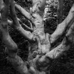 """""""Knobby Tree"""" by rbagwell"""