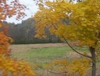 FALL IN LEIPERS FORK, TN 2009