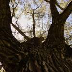 """""""Tree - Warmify"""" by nankysphotos"""