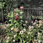 """""""Flower Garden"""" by RayPayette"""