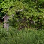 """Hidden Barn"" by JasonMayoff"