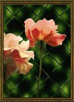 Pink Roses, Patterned Glass