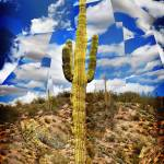 """King Saguaro"" by ScovoPhoto"