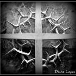 """Crown of Thorns"" by dennislopez"