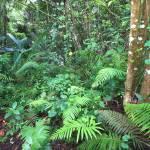 """Tropical Rainforest - Puerto Rico"" by kishwild"