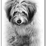 """Dog"" by DimaFon"