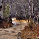"""Fern Lake Road"" by gwigler"