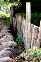 Fence Along the Path