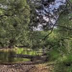 """Sleepy river"" by RayPayette"