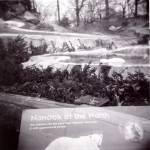 """Nanook of the North"" by maryjorosania"