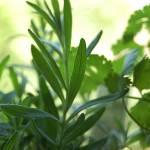 """""""lavender?"""" by maryjorosania"""