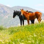 """Red and Black Horses in the mountains"" by a1luha"