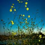 """Moss Landing Sunset"" by sabinedukes"