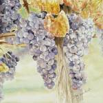 """grapes"" by marysusan"