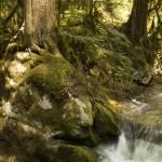 """Woods and creek"" by amyamoroso"