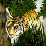 """Tiger Stalking"" by vigliotti"