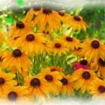 """ONE PINK FLOWER"" by pjaysart"