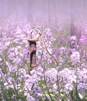 Old Water Pump and Wildflowers