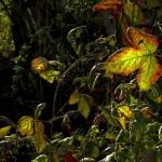 """Blackberry Jungle"" by sabinedukes"