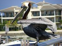 pelican prepare for takeoff