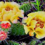 """CACTUS FLOWER"" by sneedzone"