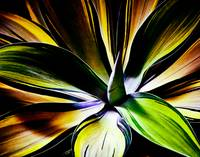 Psychedelic Agave