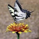 """Nectar"" by PamellaAllenArt"