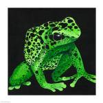 """Green Poison Arrow Frog"" by odessa"