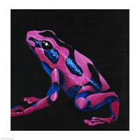 Purple Poison Arrow Frog