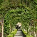 """Garden Arbor Tunnel"" by Groecar"
