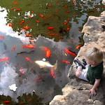 """""""koi pond"""" by pietrastone"""