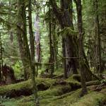 """Mossy trees"" by amyamoroso"