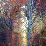 """""""autumn sunlight"""" by pietrastone"""