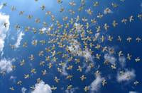Doves over Amalfi