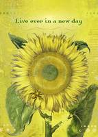 Live Ever in a New Day