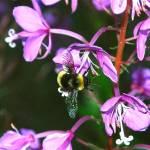 """""""bee"""" by BobBerwyn"""