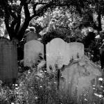 """""""Brompton Cemetery. London, England"""" by jwaynehiggs"""