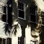 """Palmetto Window Shade"" by PadgettGallery"