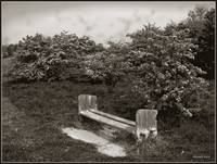 Lonely old bench