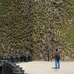 """Ivy Wall, London 2010."" by Jacobanchini"